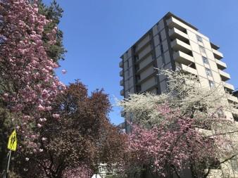 Весна в Західному Ванкувері