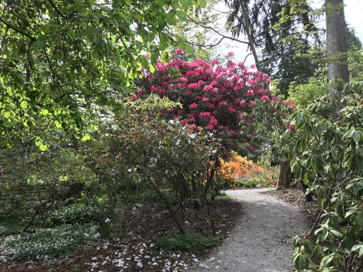 Весна при вході в Stanley Park