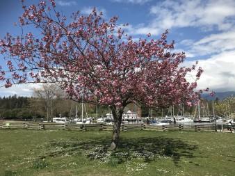 Дерево і човни